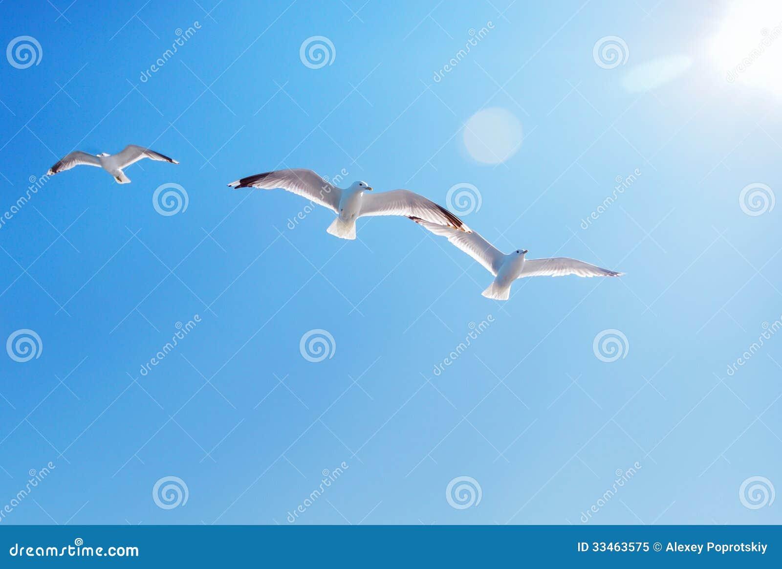 Three seagulls and sun