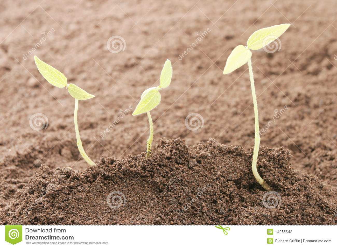 Three seedlings in soil stock photography image 14065542 for Soil young s modulus