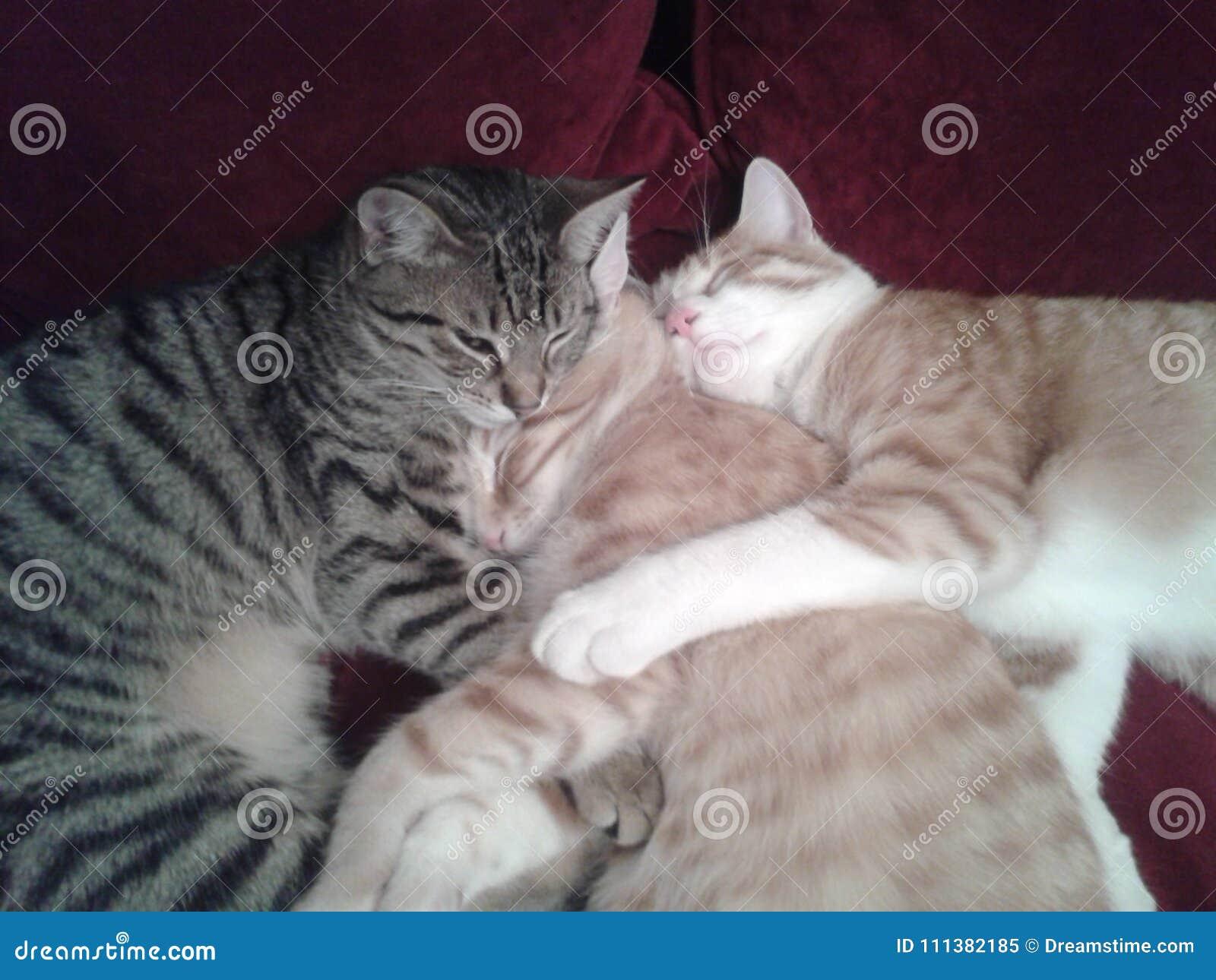 Lucky cat family