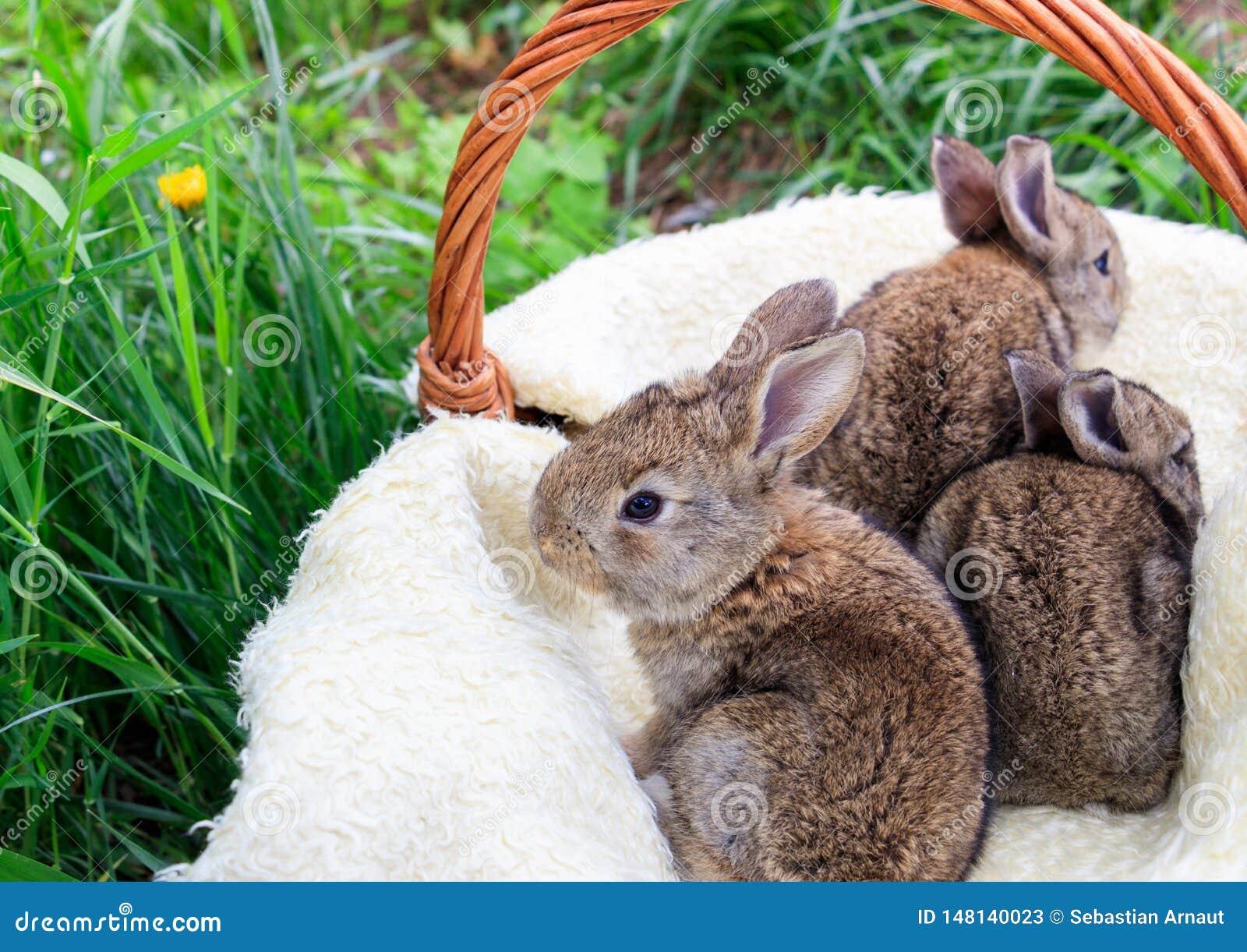 Three small and beautiful bunnies