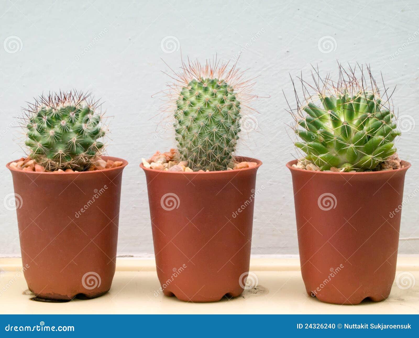 1000  ideas about Mini Cactus on Pinterest | Mini cactus garden ...
