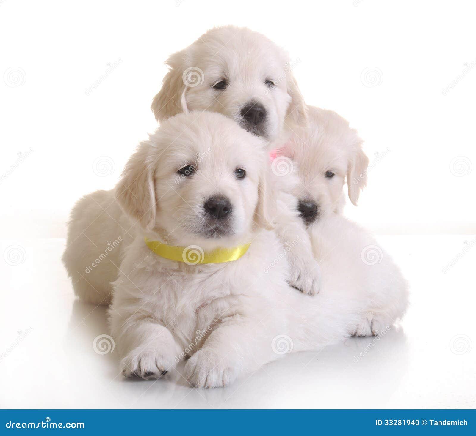 three small cute dog puppy stock photo   image 33281940