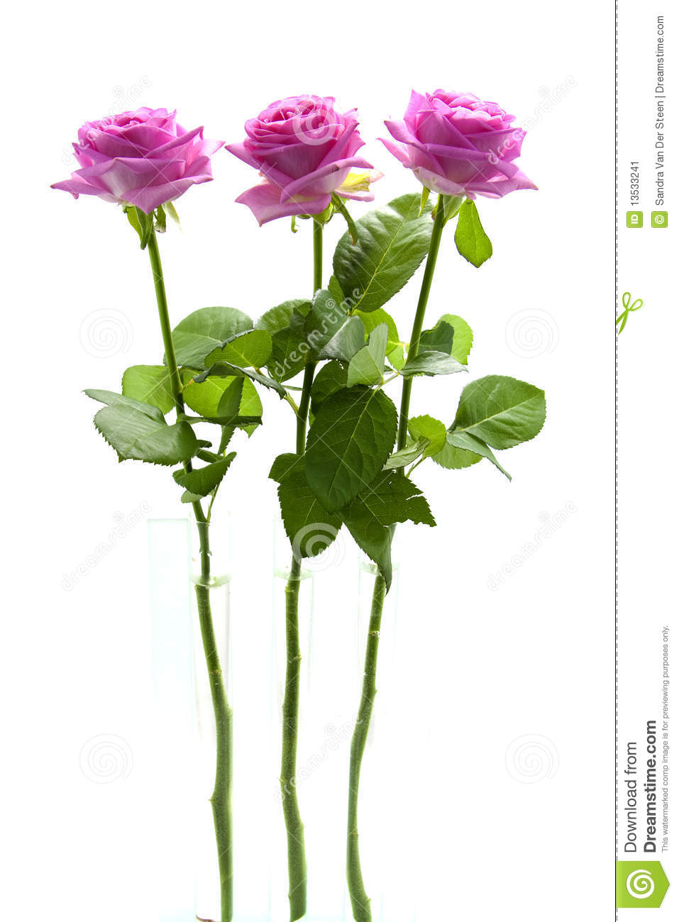 Download Three standing pink roses stock image. Image of background - 13533241