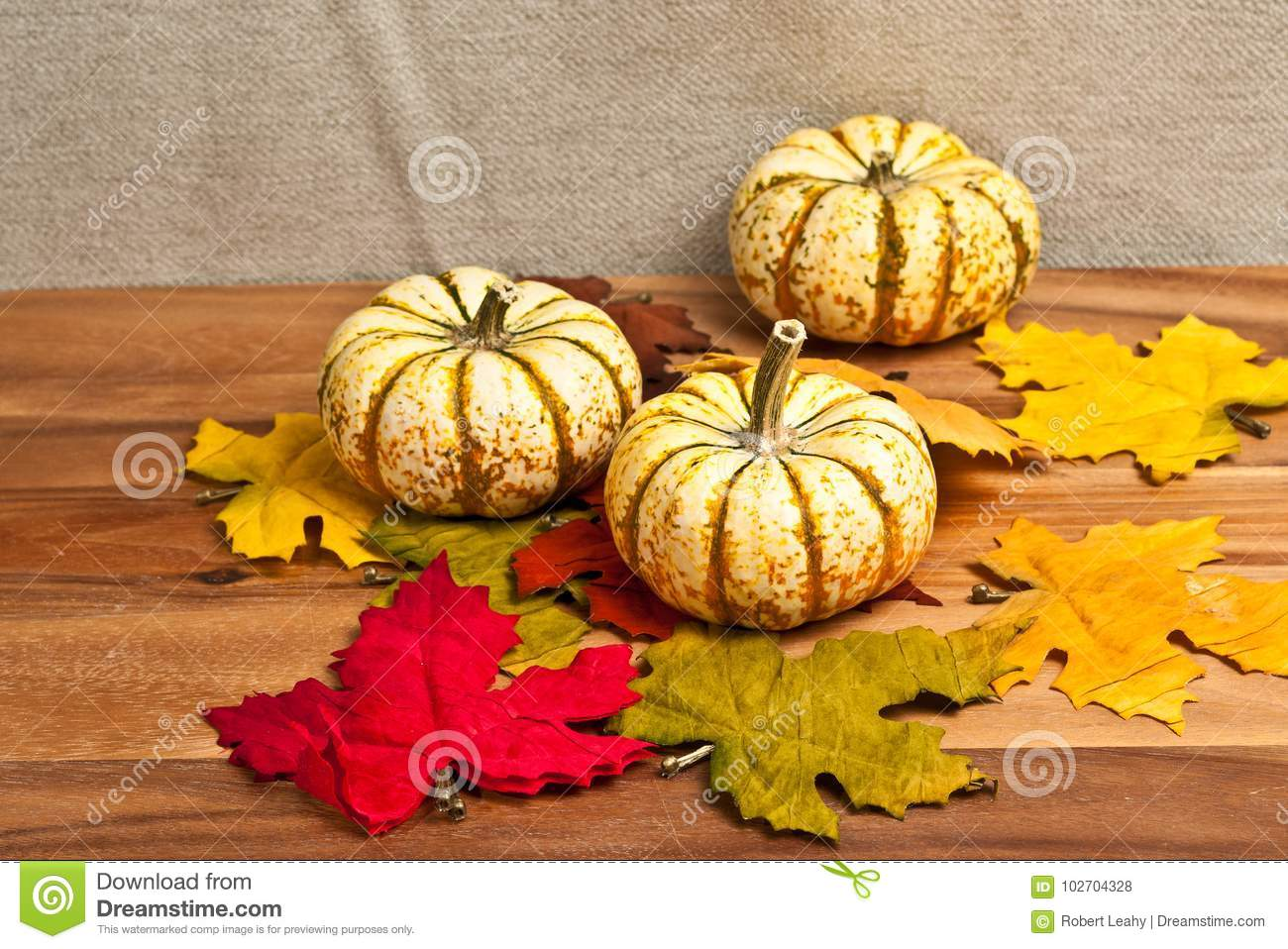 Three Thanksgiving pumpkins and dried leaves
