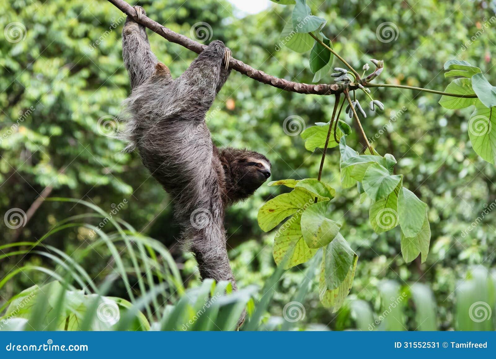 sloth reaching