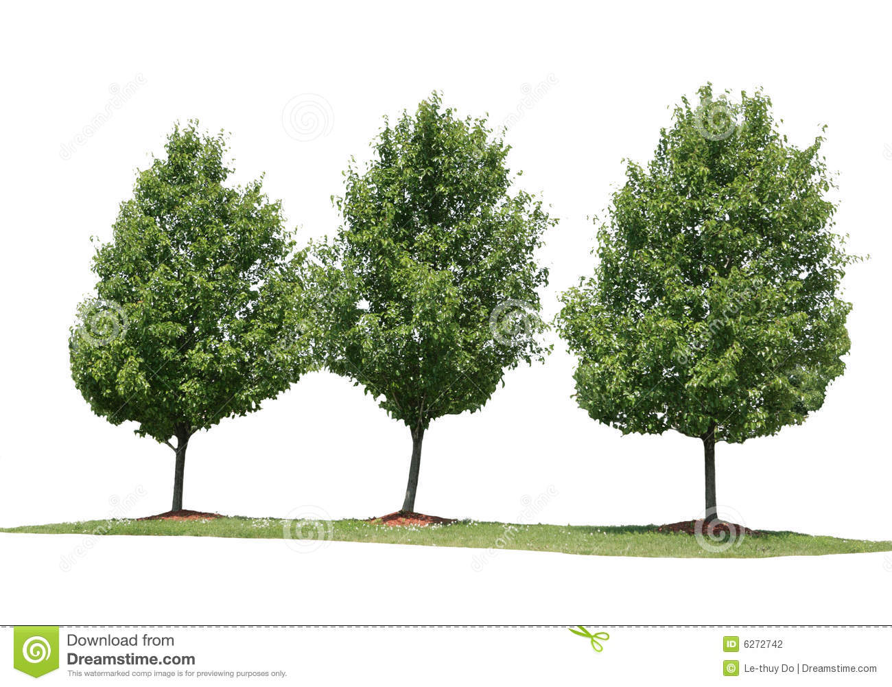 Three Trees Stock Photography - Image: 6272742