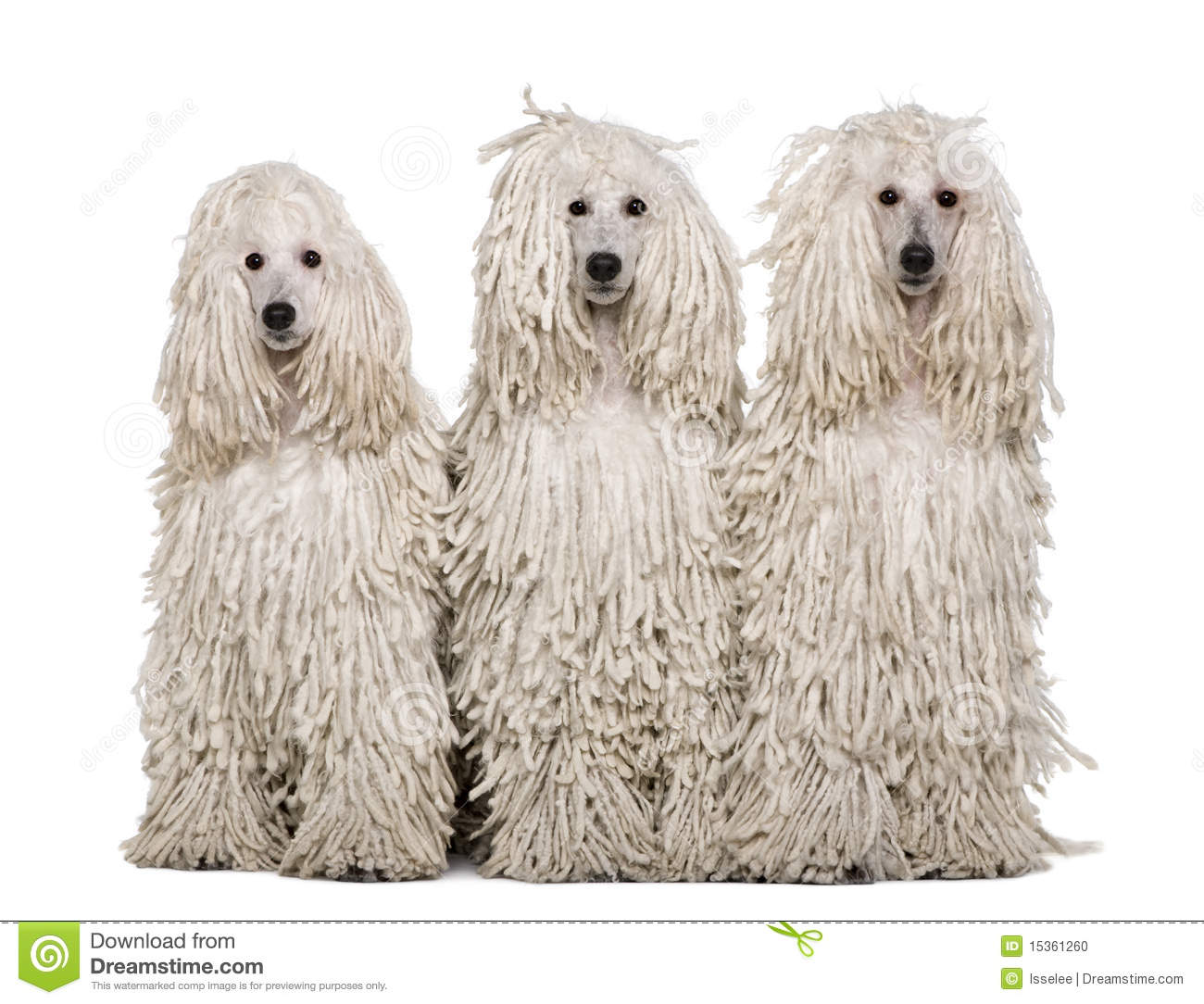 Z Poodles Three White Corded Sta...