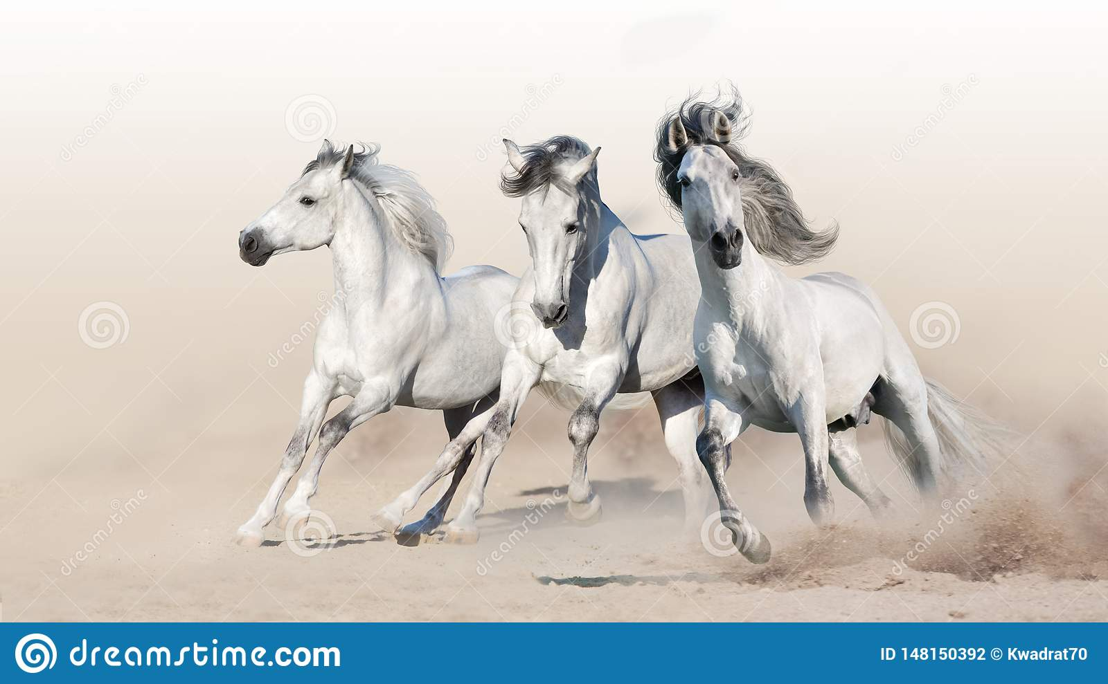 162 327 White Horse Photos Free Royalty Free Stock Photos From Dreamstime