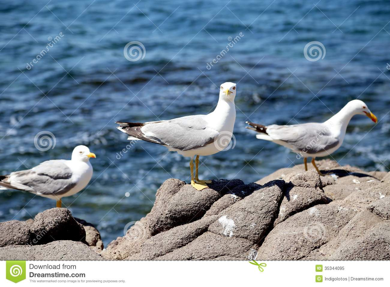 Seagulls On Rocks Clip Art