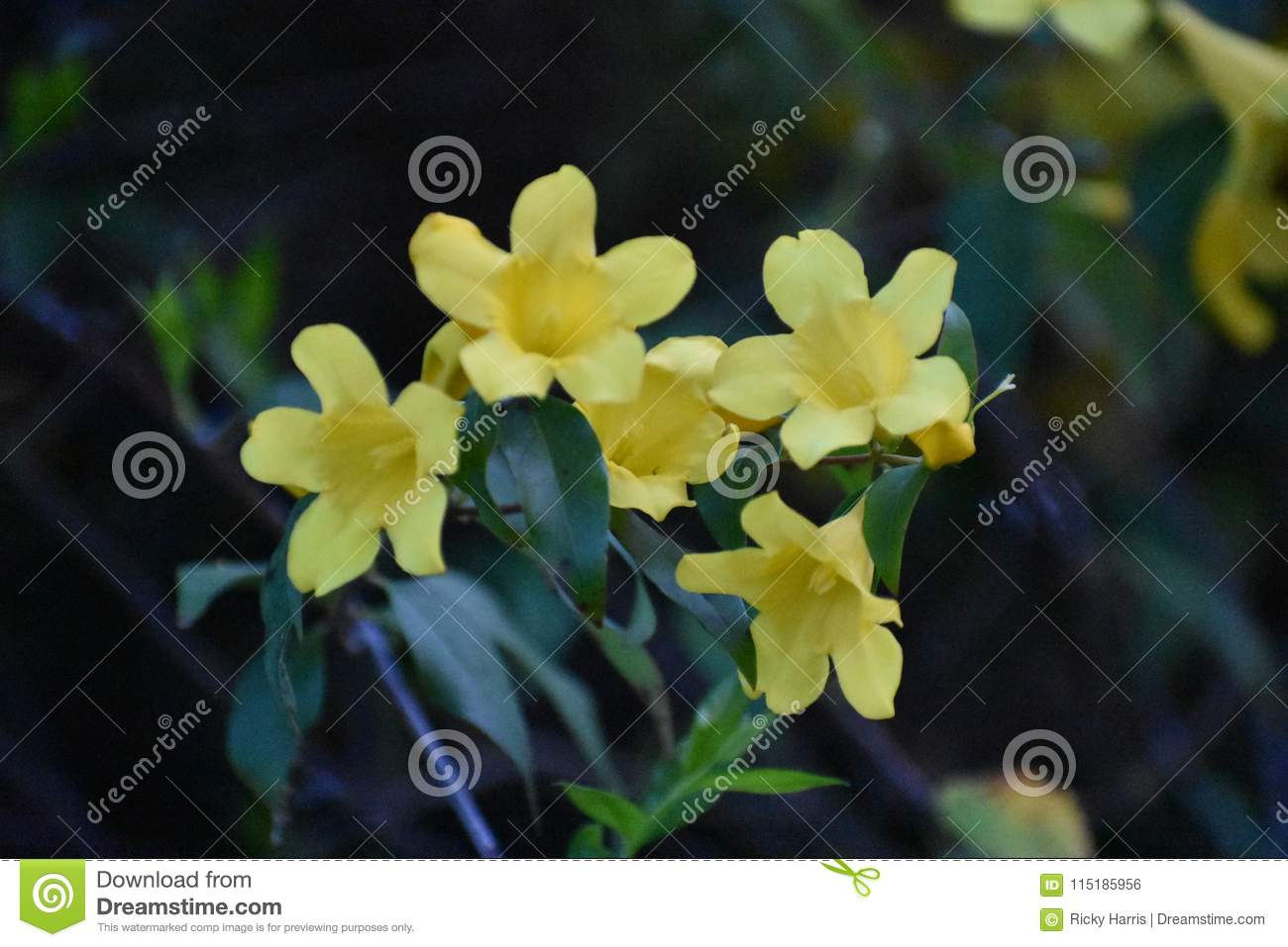 Three yellow flowers in festival stock photo image of stilllife flowers found at texas at scarborough renaissance festival in april of 2018 izmirmasajfo
