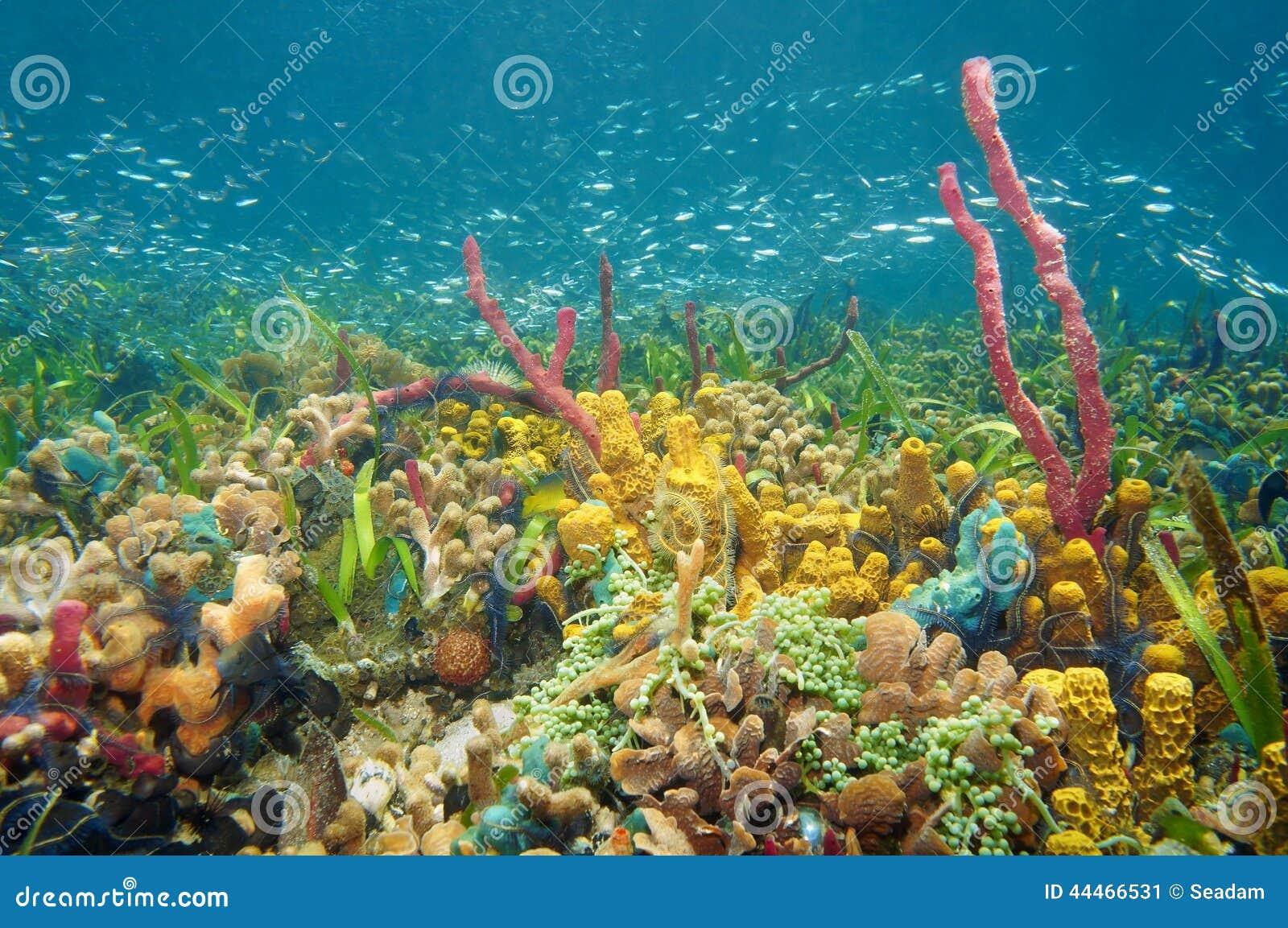 colorful sea life | Marine Life | Pinterest |Colorful Underwater Life