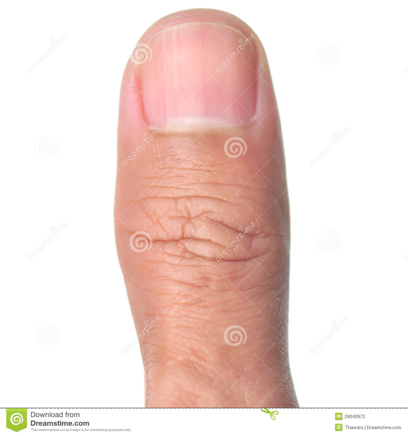 Thumb finger stock photo. Image of anatomy, image, curves - 29040972