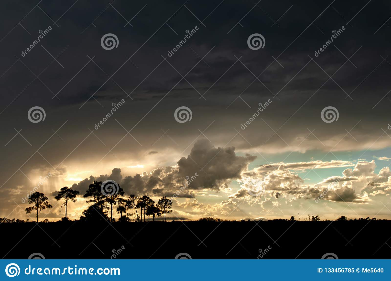 A thunderstorm sweeps over the Everglades