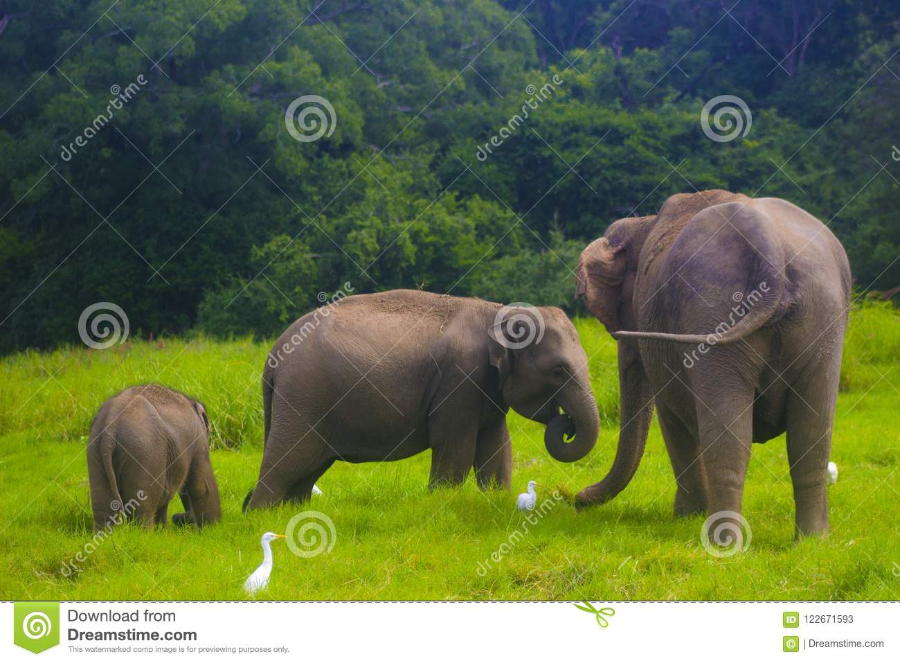 Thunpath Rana Eliphant Family