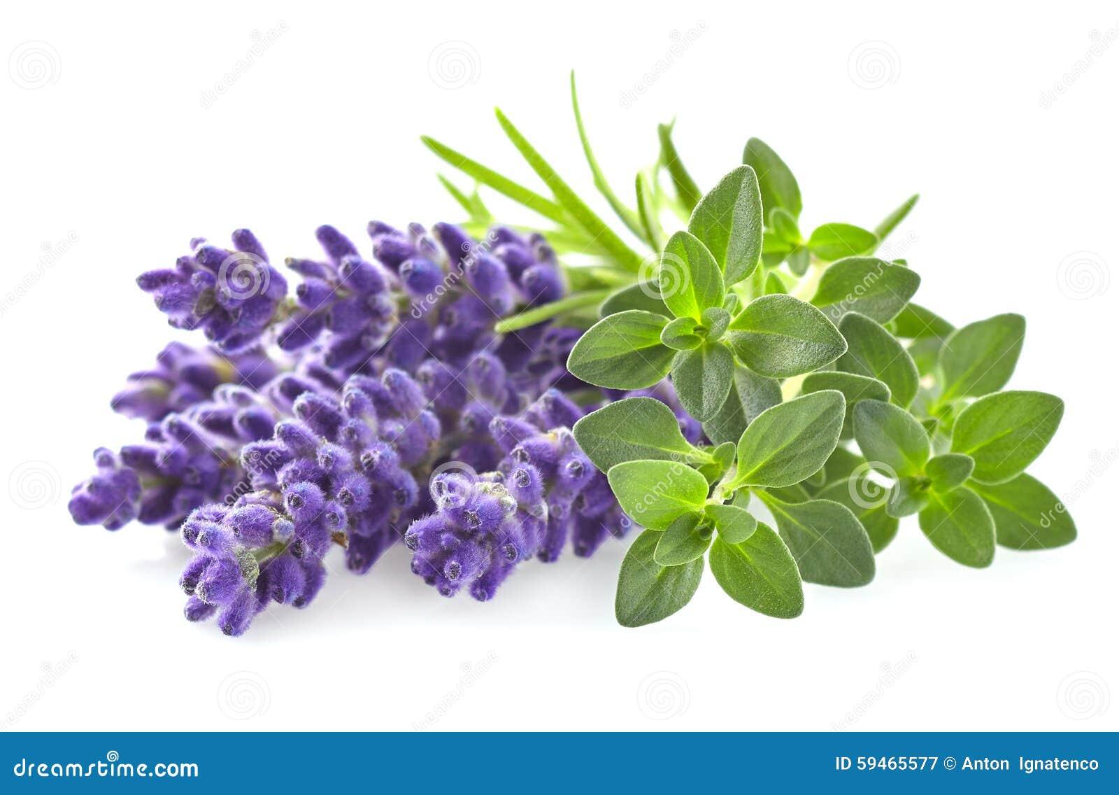 thymian mit lavendel stockfoto bild 59465577. Black Bedroom Furniture Sets. Home Design Ideas