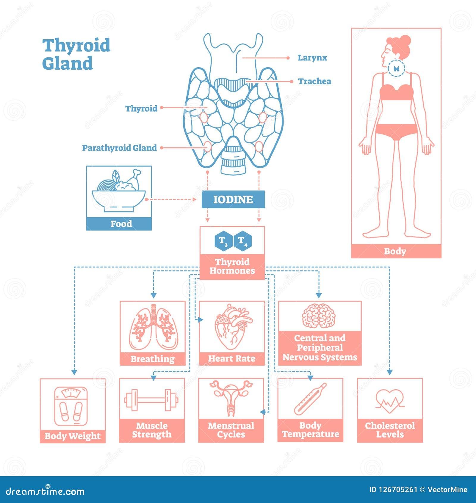 medical science vector illustration diagram