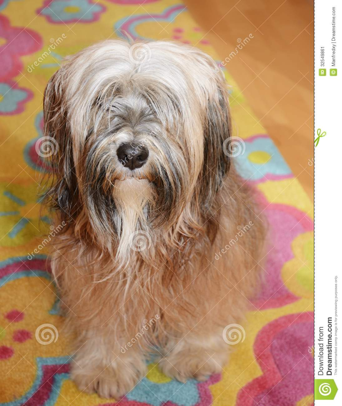 Long Haired Terrier Mix | Dog Breeds Picture