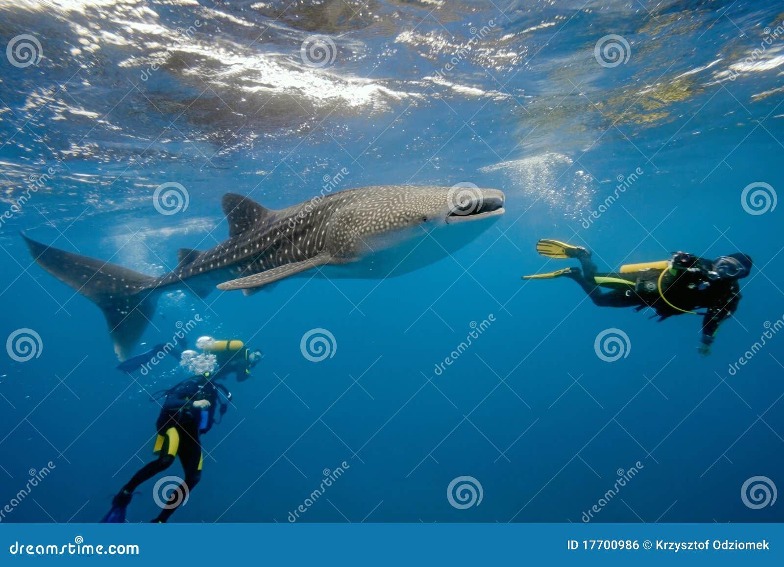 Tiburón y zambullidores de ballena de maldives