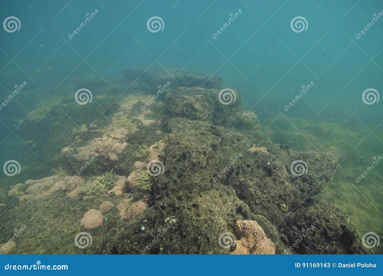 Tidal Rocky Platform Underwater Stock Image - Image of depth
