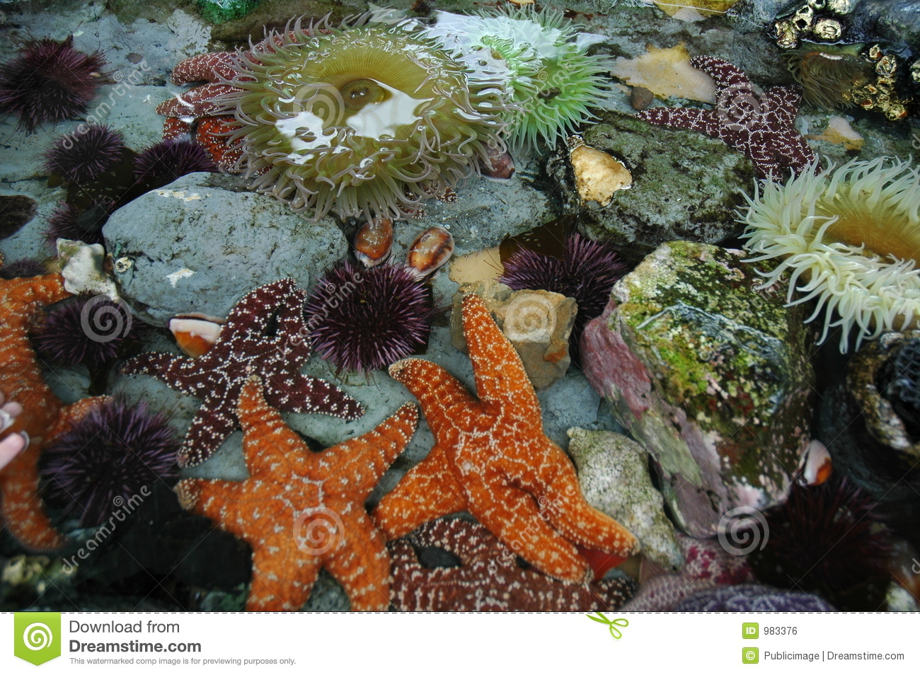Tide Pool Animals Royalty Free Stock Image - Image: 983376