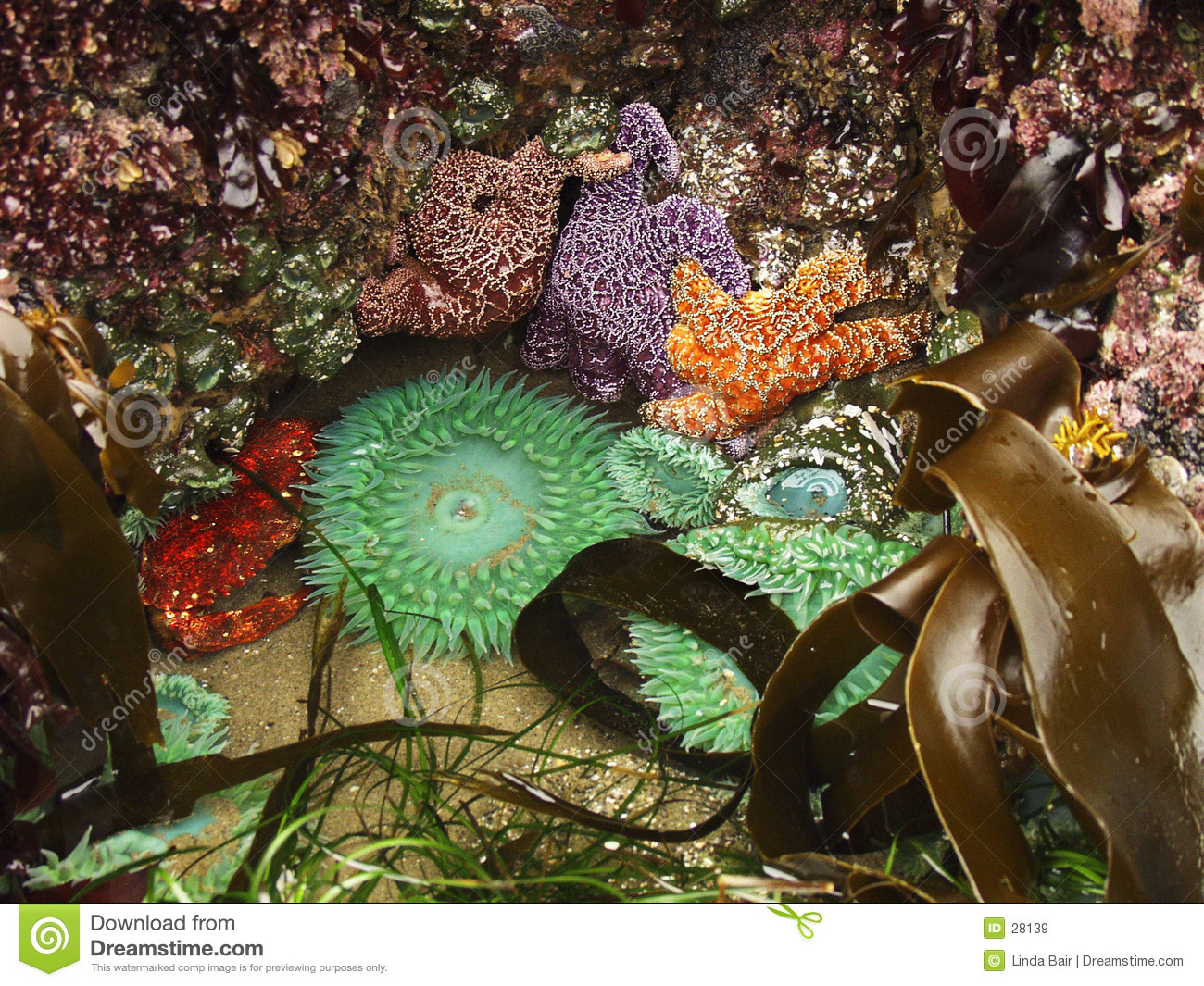 Tide pool ecosystem stock image image of ironrodart for Ecosystem pool
