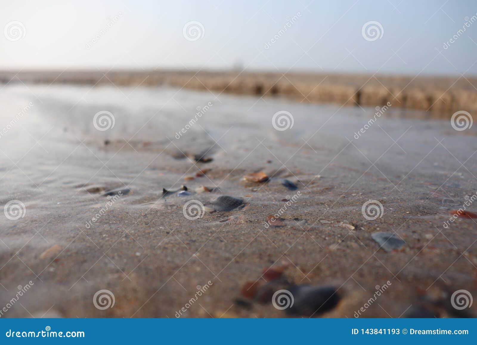 Tide and seashell