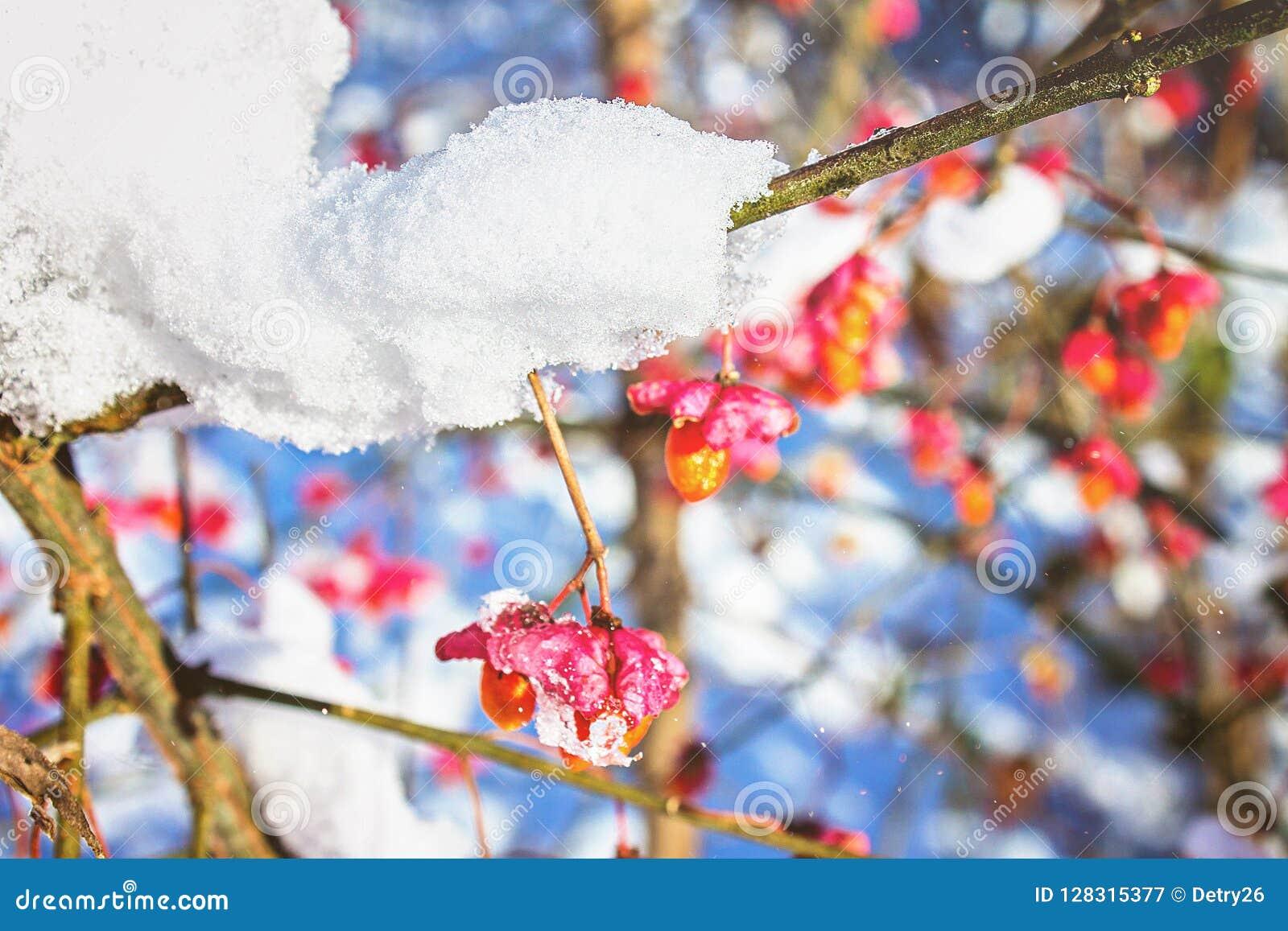 Tiden av vintern och snö för ukraine för molodabergsun vinter sikt blå sky Snöig natur för vinter Frostig luft Den första insnöad