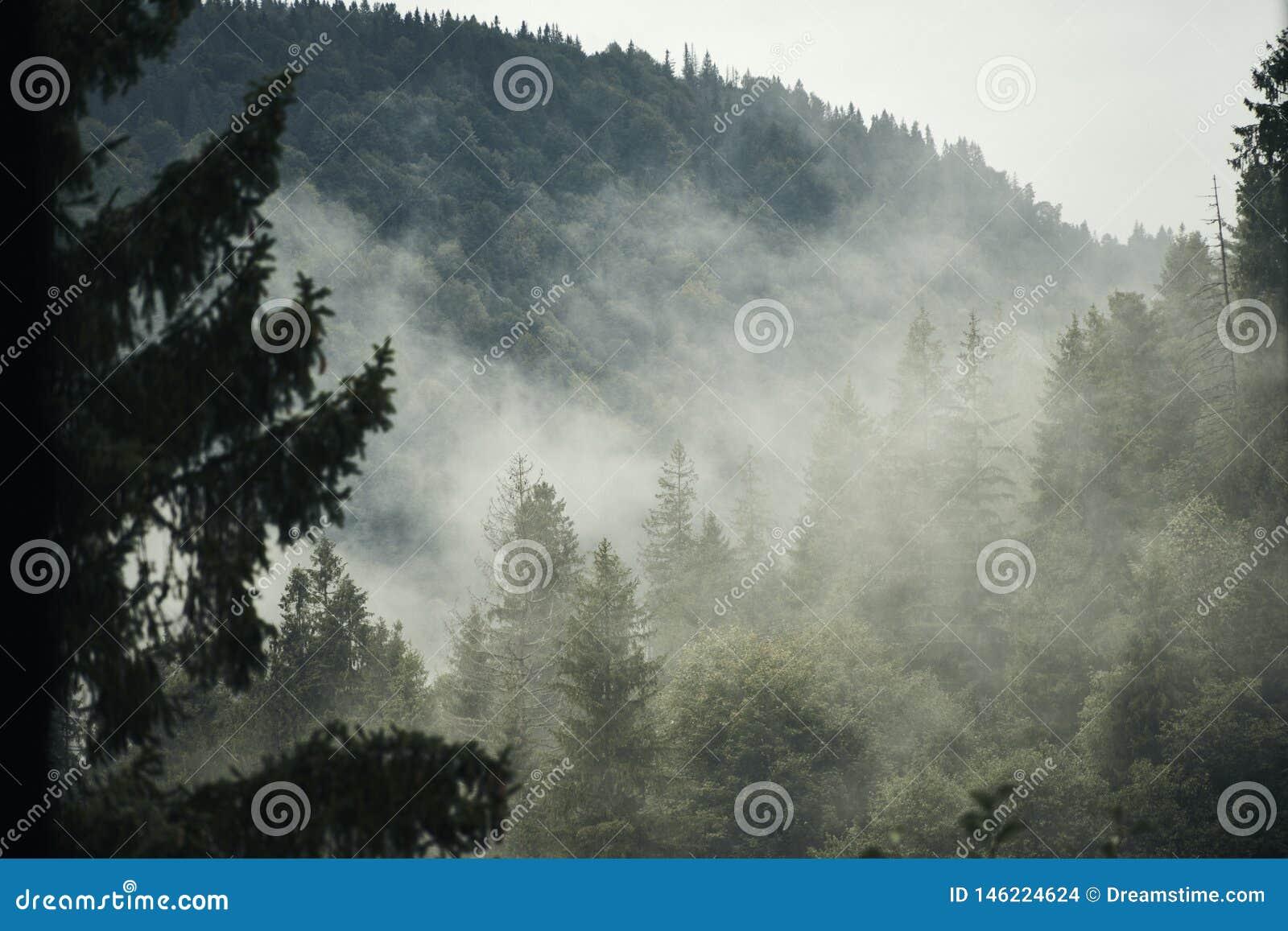 Tidig skog under dimman