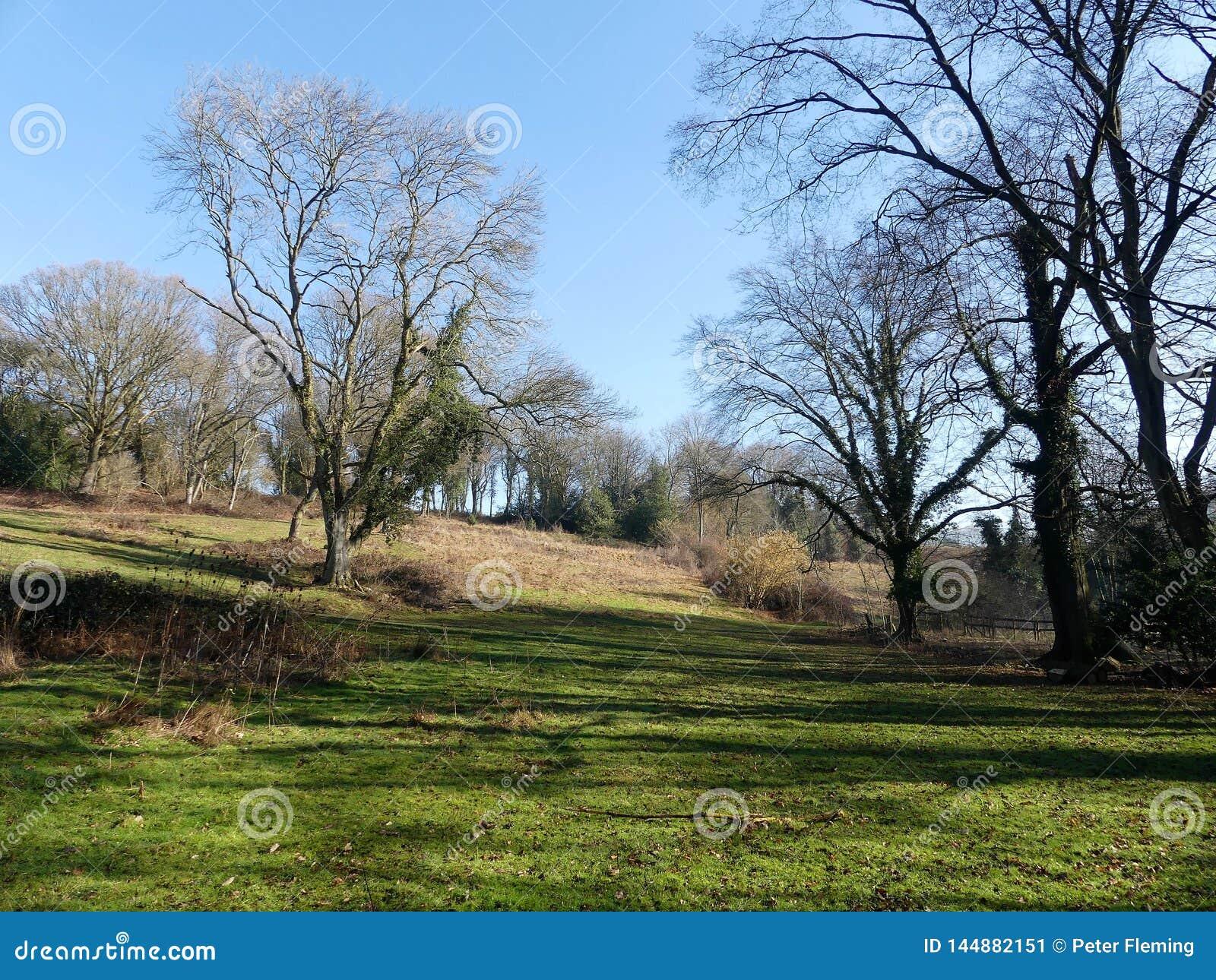 Tidig vårplats på den Chorleywood allmänningen, Hertfordshire, UK