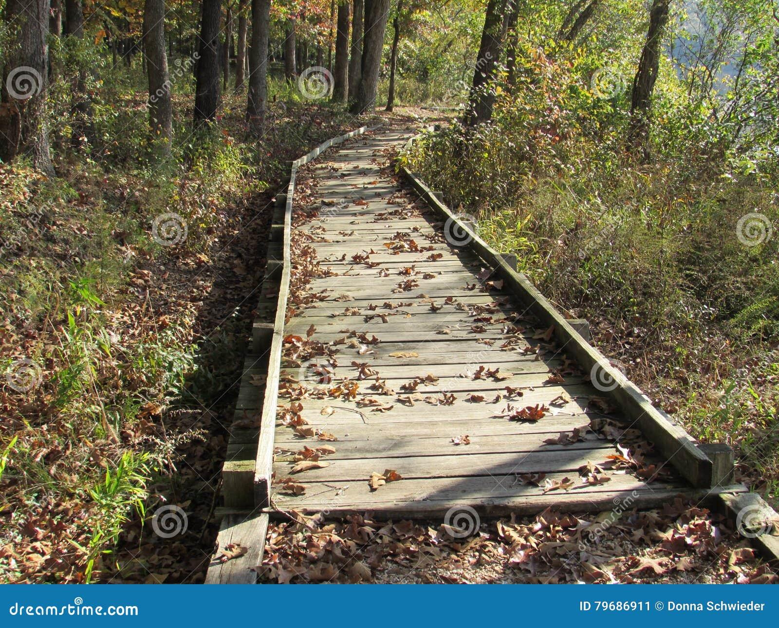 Tidiga Autumn Wooden Pathway till och med skogen