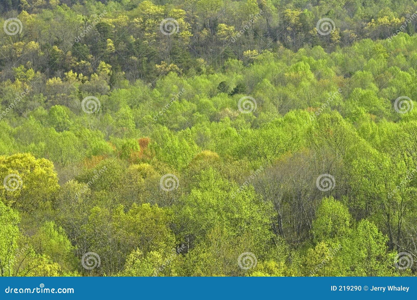 Tidiga fjädertrees