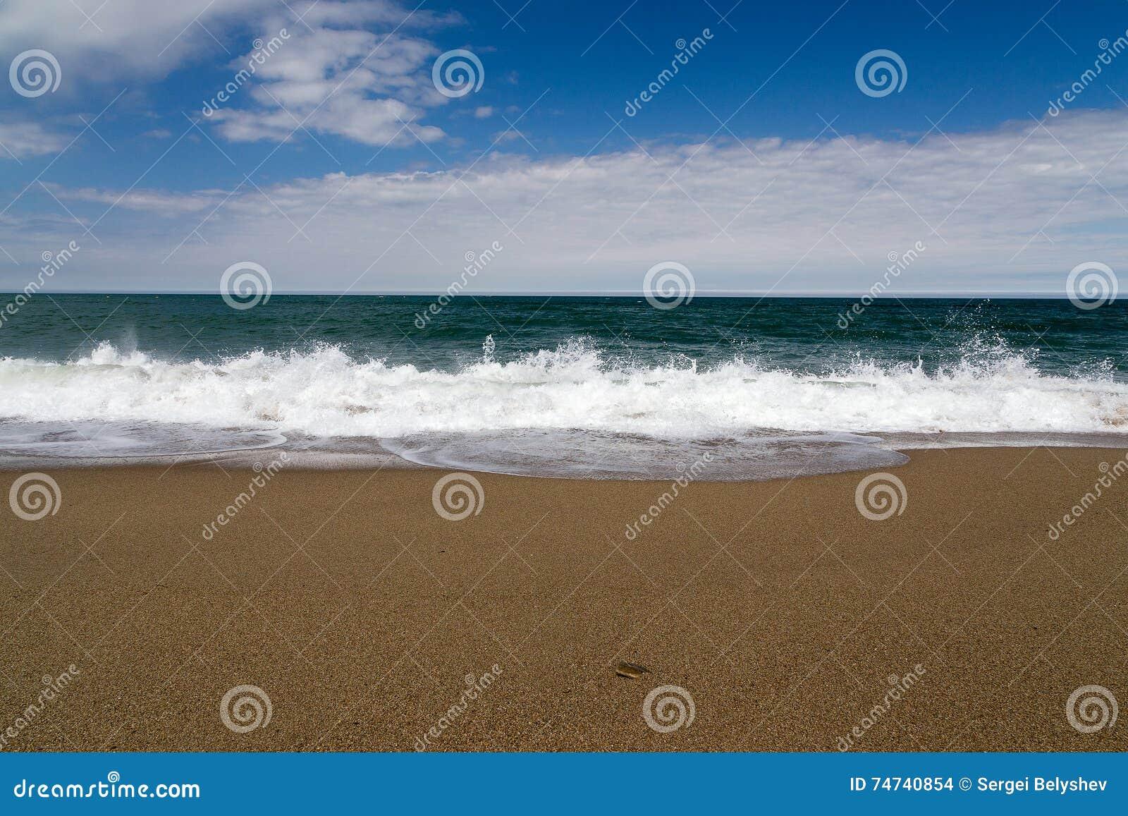 Tidvattens- tråkmåns, sandig strand