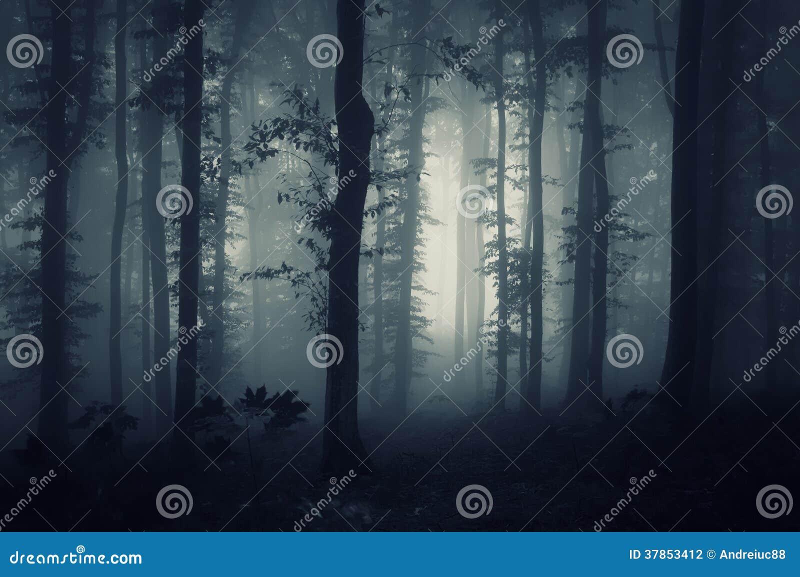 Tiefes dunkles Holz mit gruseligem Nebel