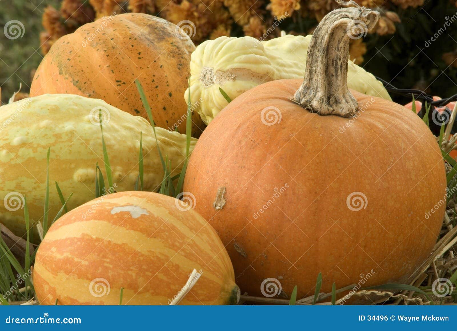 Download Tiempo de cosecha foto de archivo. Imagen de grano, crecimiento - 34496