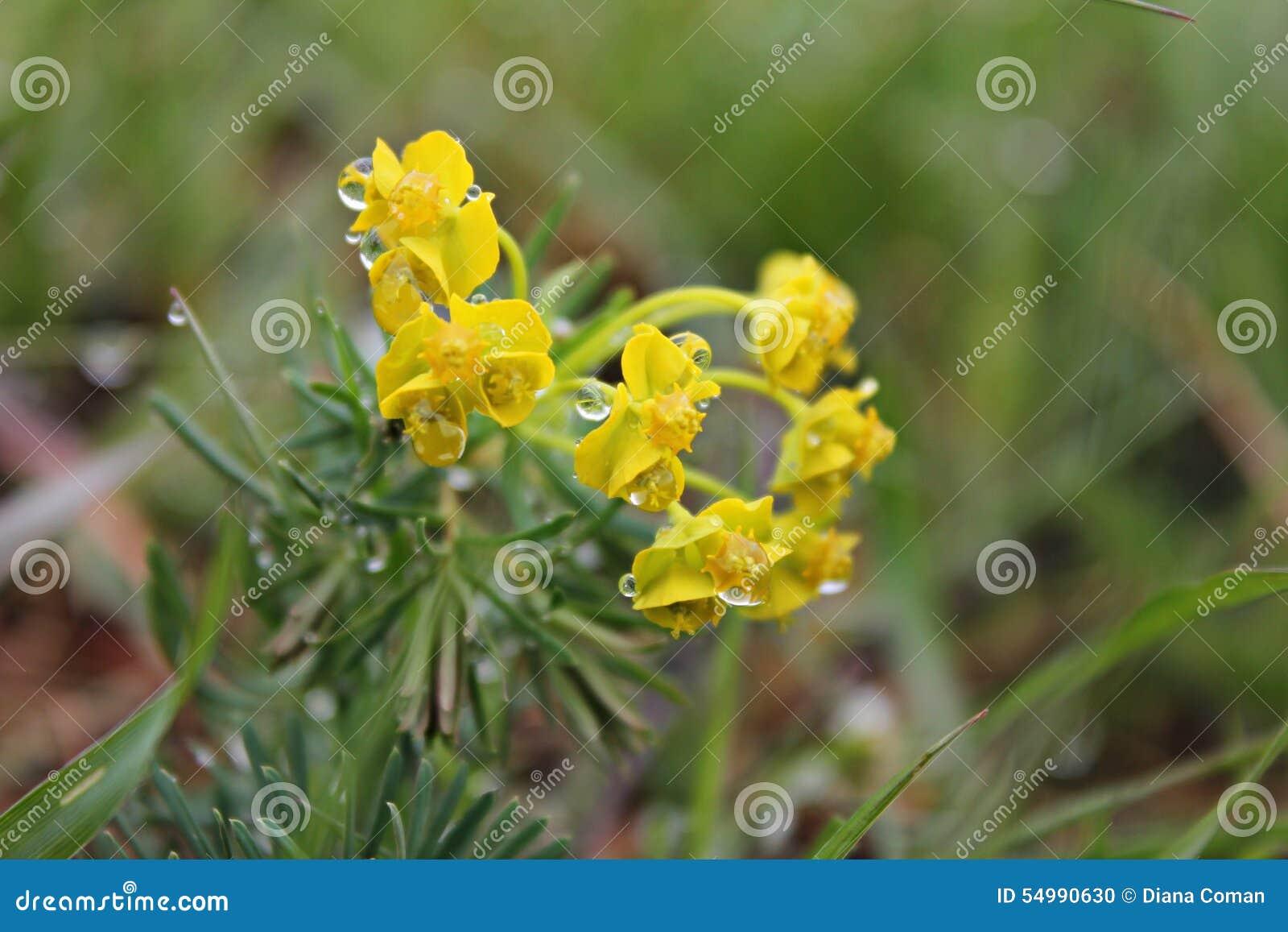 Tiempo de primavera - flores amarillas