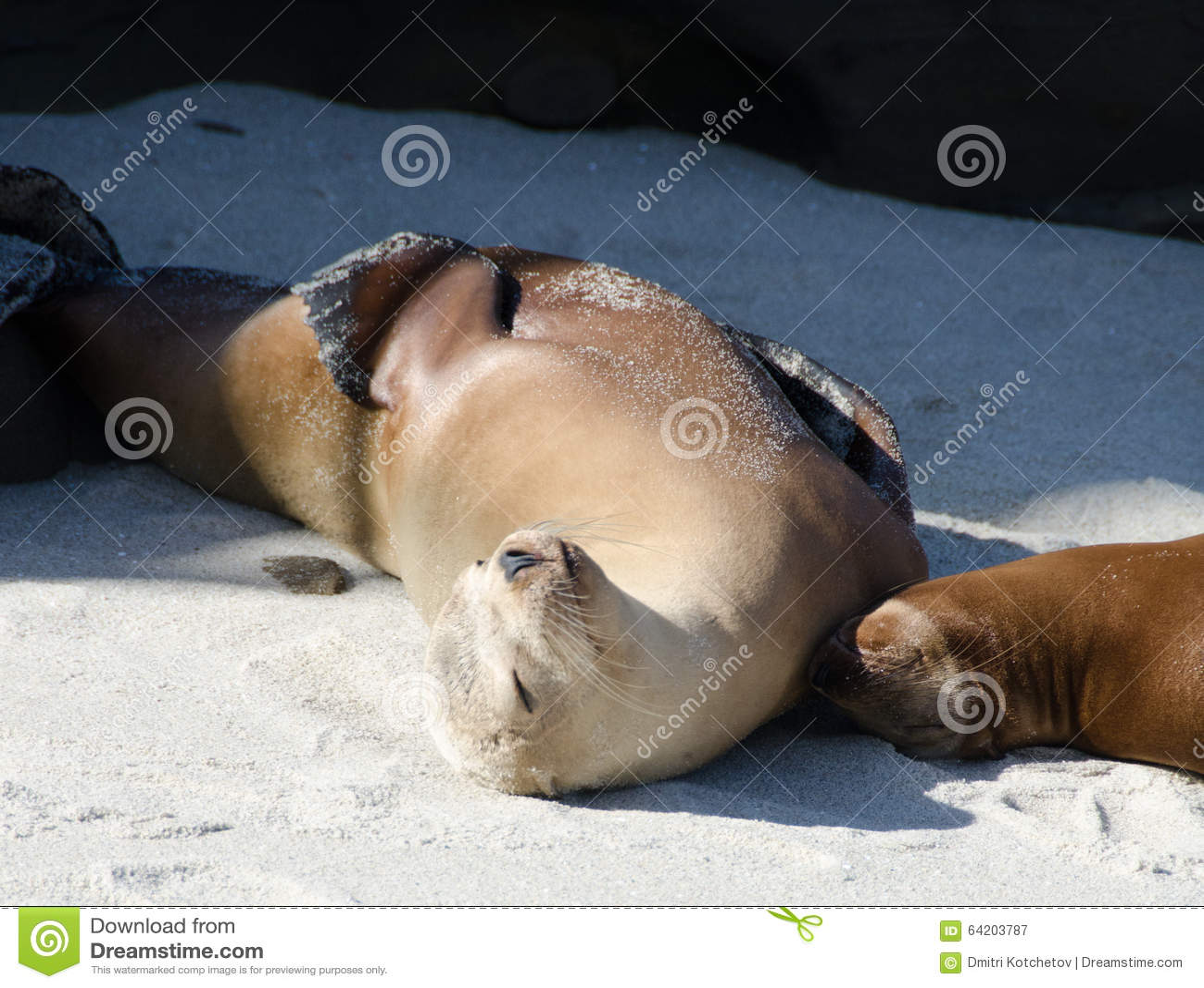 Tiempo de relajación para un par de leones marinos en el punto La Jolla