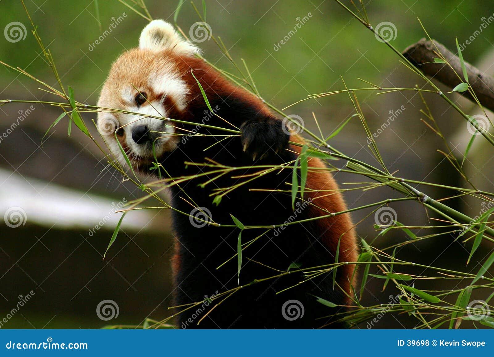 Download Tiempo del bocado foto de archivo. Imagen de fauna, animal - 39698