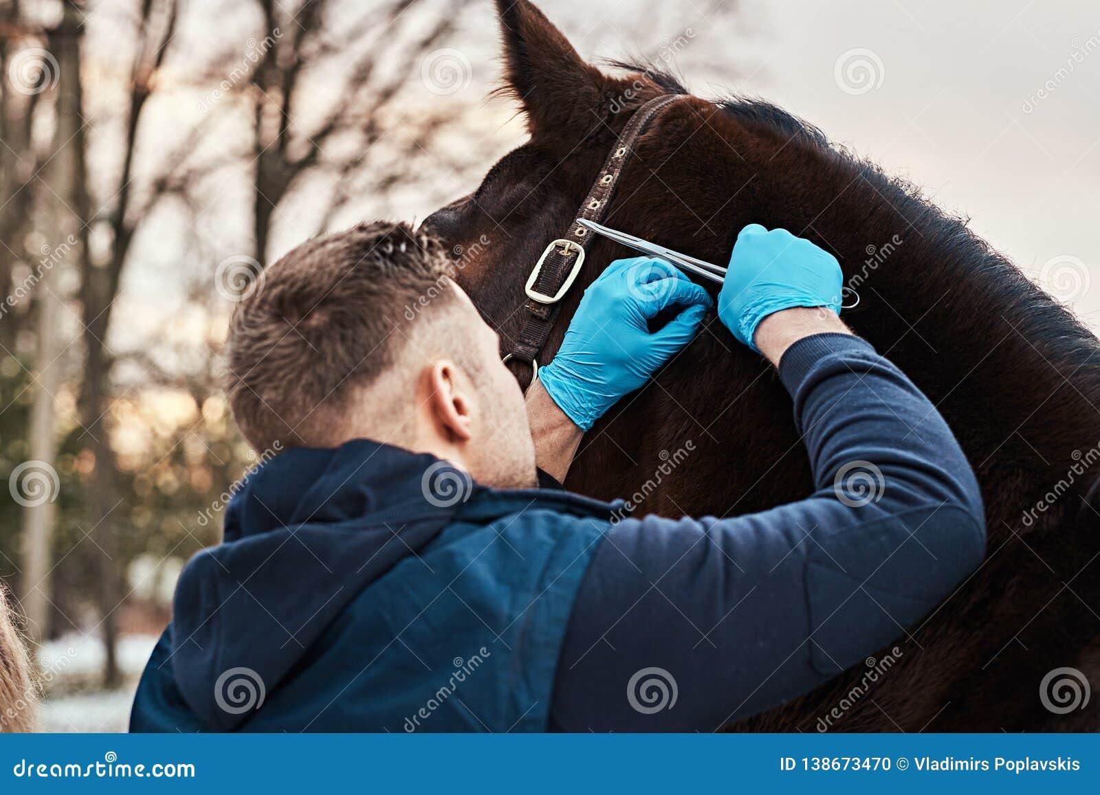 Tierarzt lässt eine externe Prüfung von einem Pferd Papillomas auf einer Ranch draußen finden