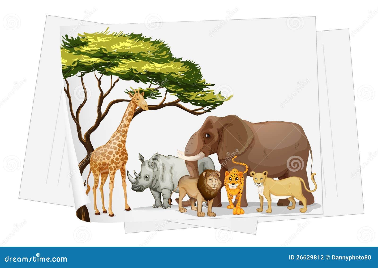 dschungel tiere dreizehn hintergrundbilder - photo #25