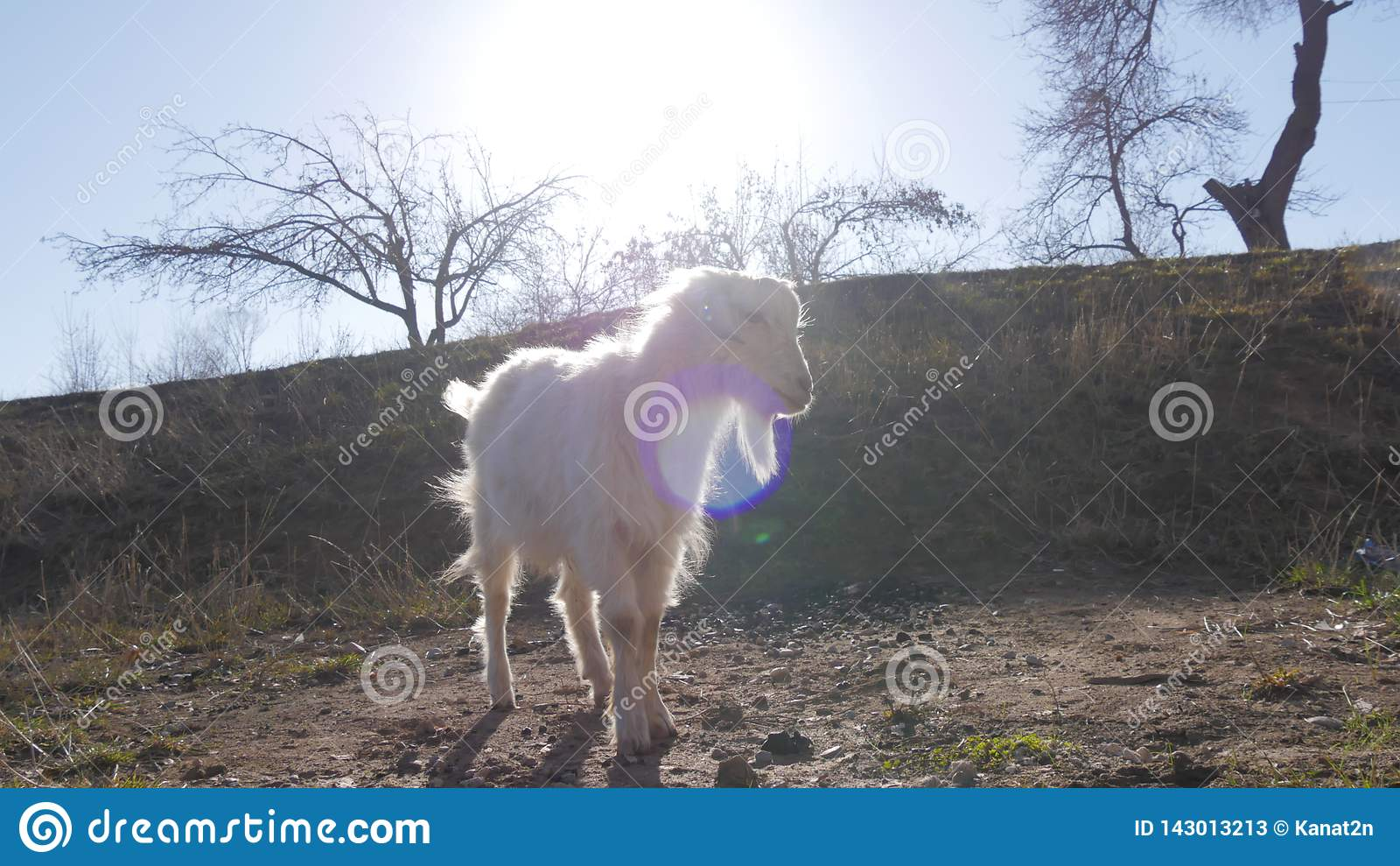 Tiere im Zoo, Ziegen