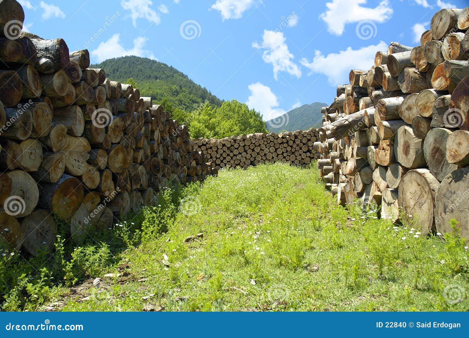 Tierra de bosques maderables