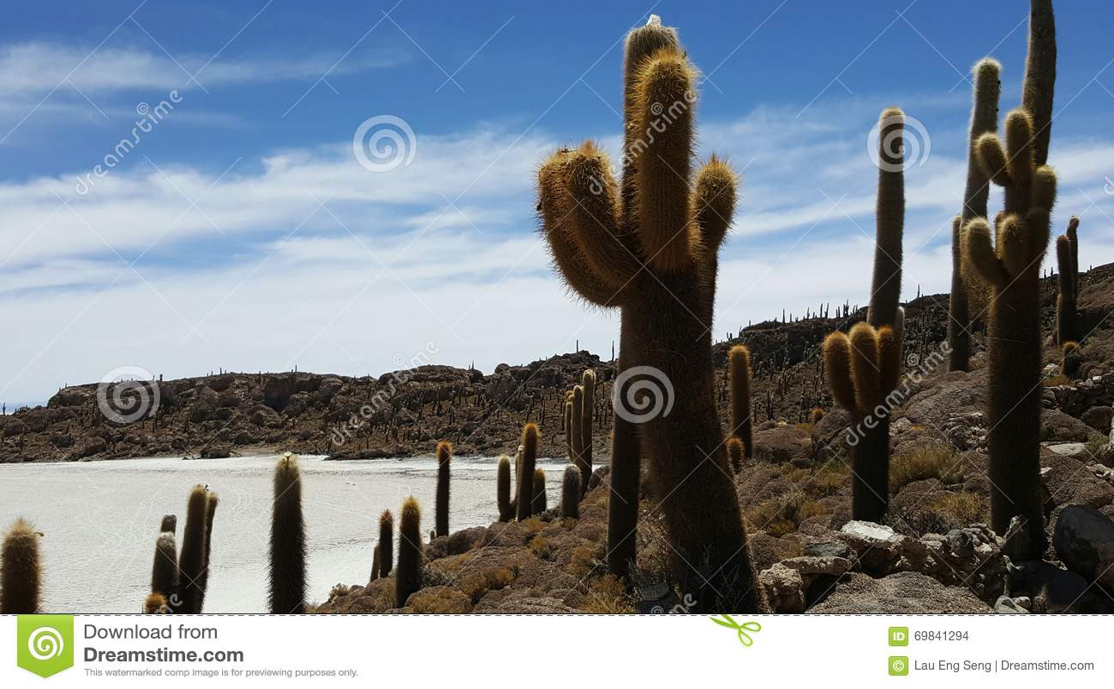 Tierra Del Cactus En Desierto Seco Foto De Archivo Imagen De - Cactus-seco