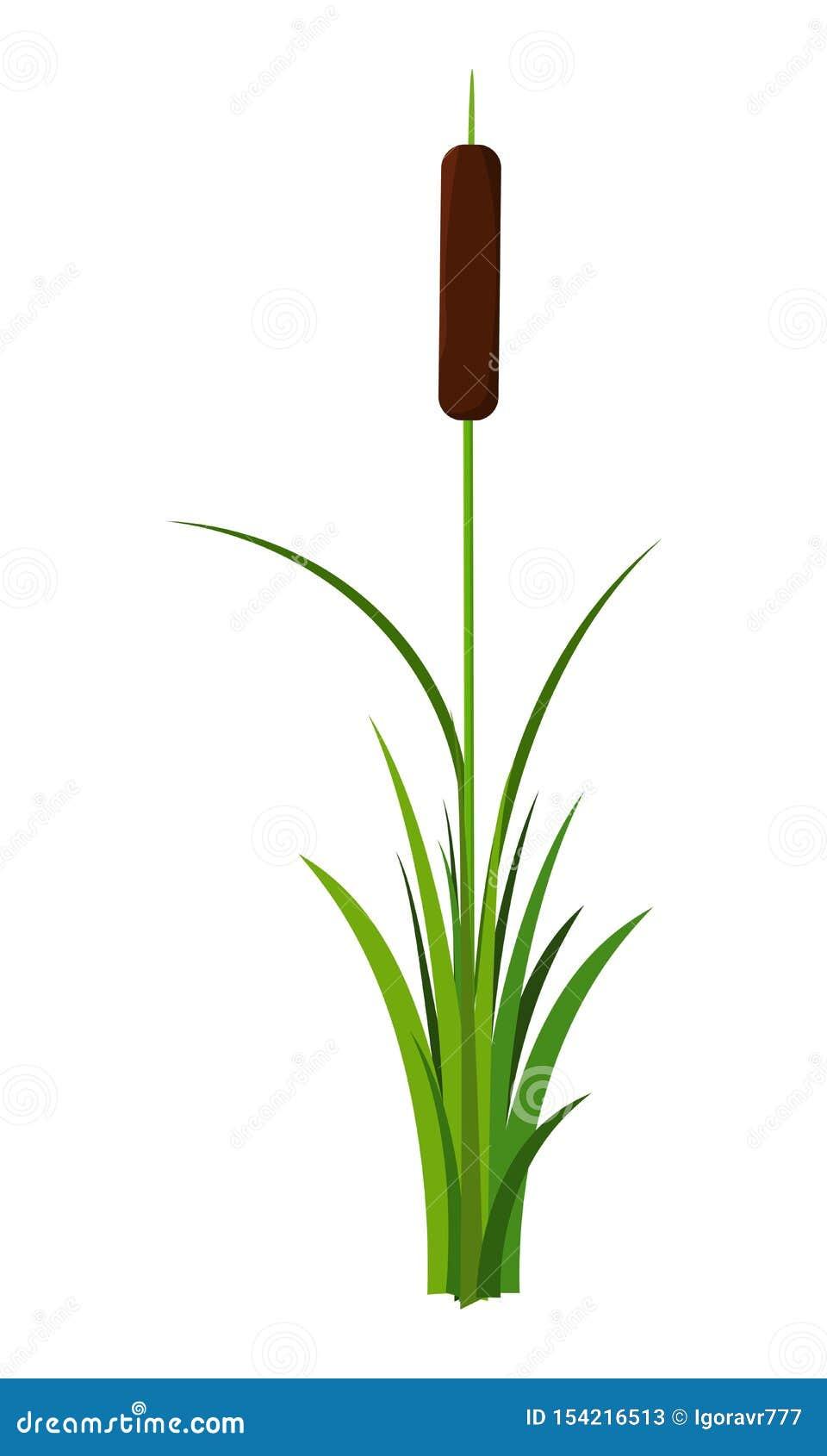 Tige tubulaire simple avec le vecteur d usine de feuilles d isolement sur le fond blanc