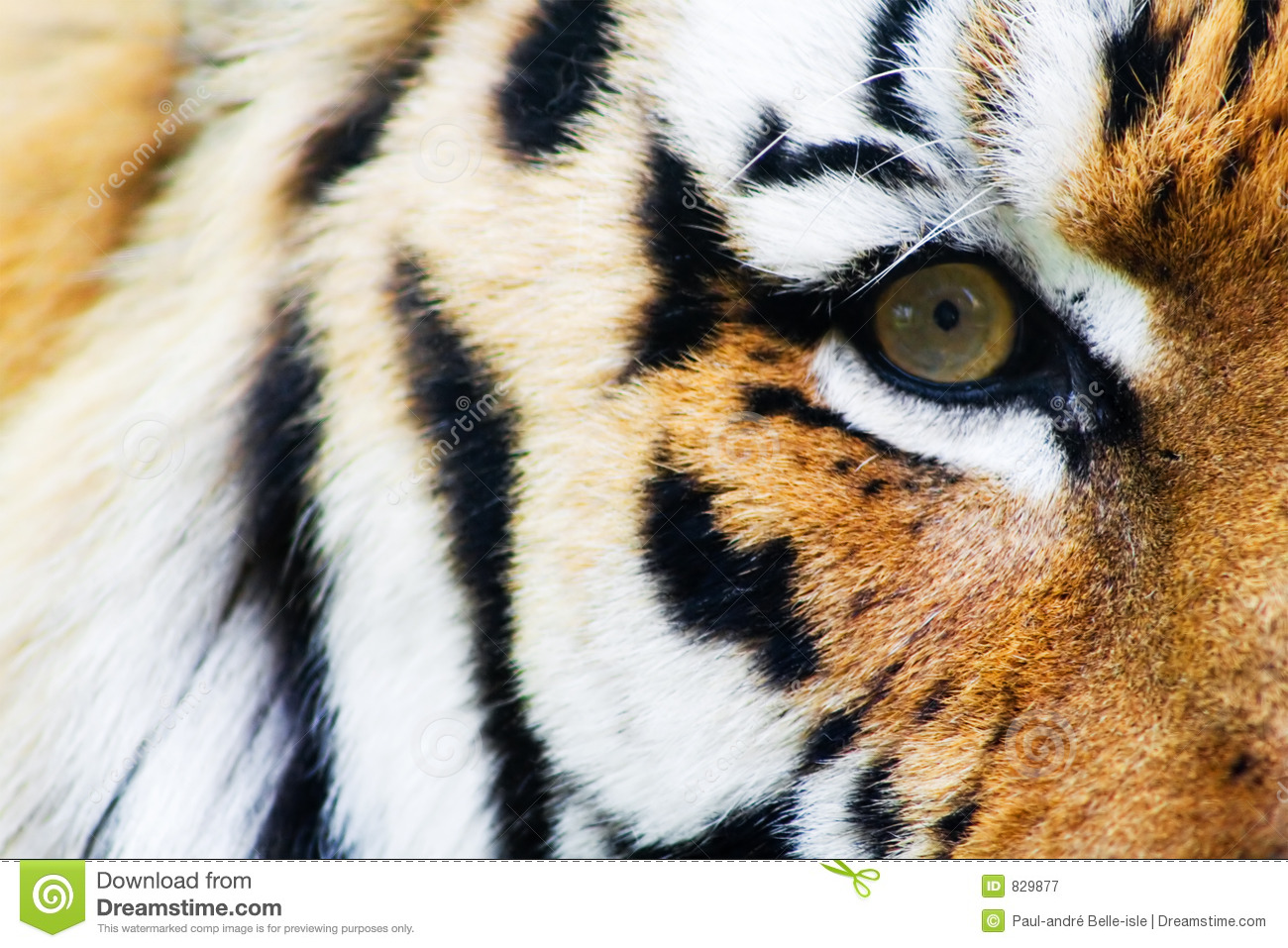 Free Royalty Free Photos Images Tiger