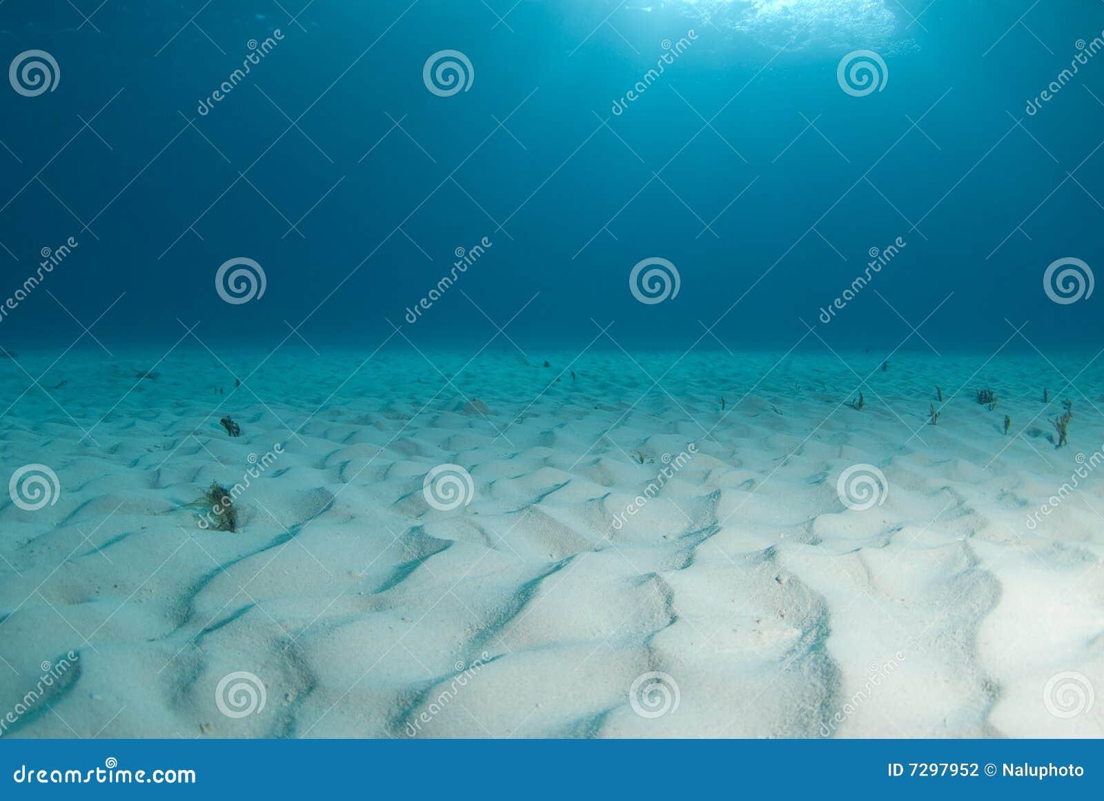 Tiger Beach Seascape