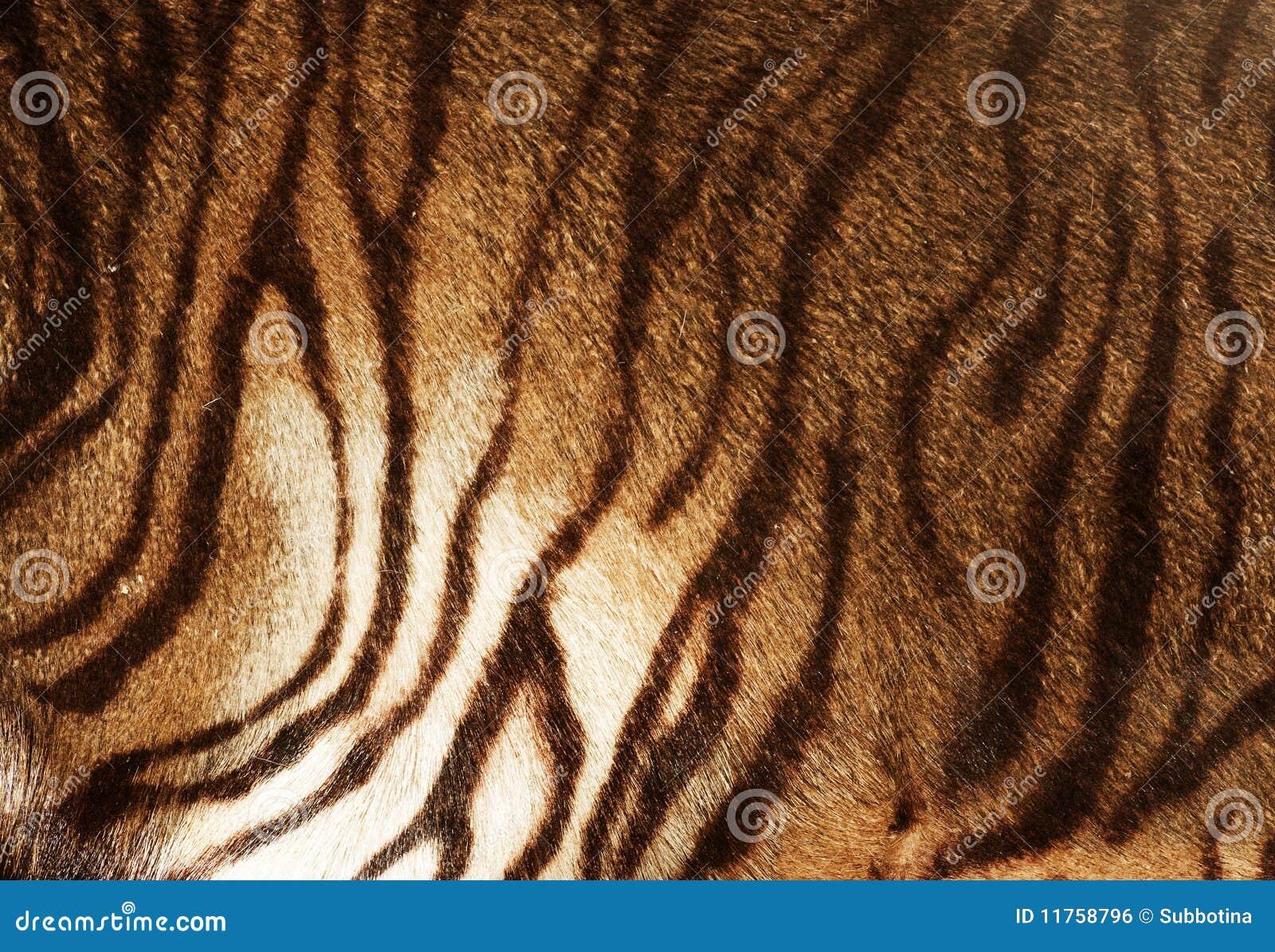 Tiger-Beschaffenheit