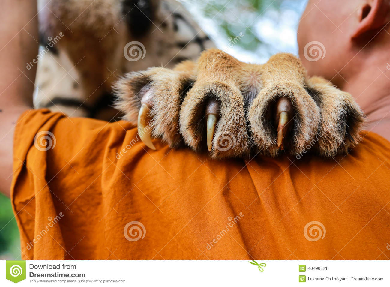 Tiger Claw Stock Photo - Image: 40496321