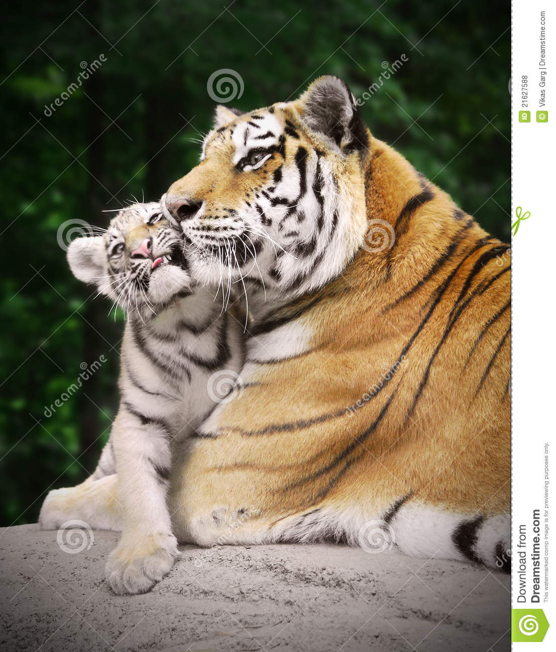 Tiger with a cub