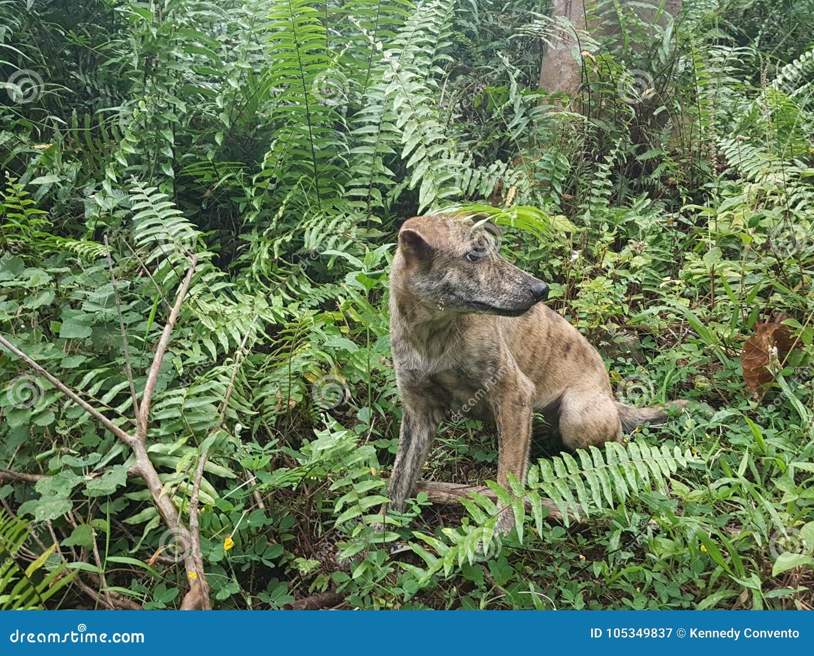Tiger the Dog