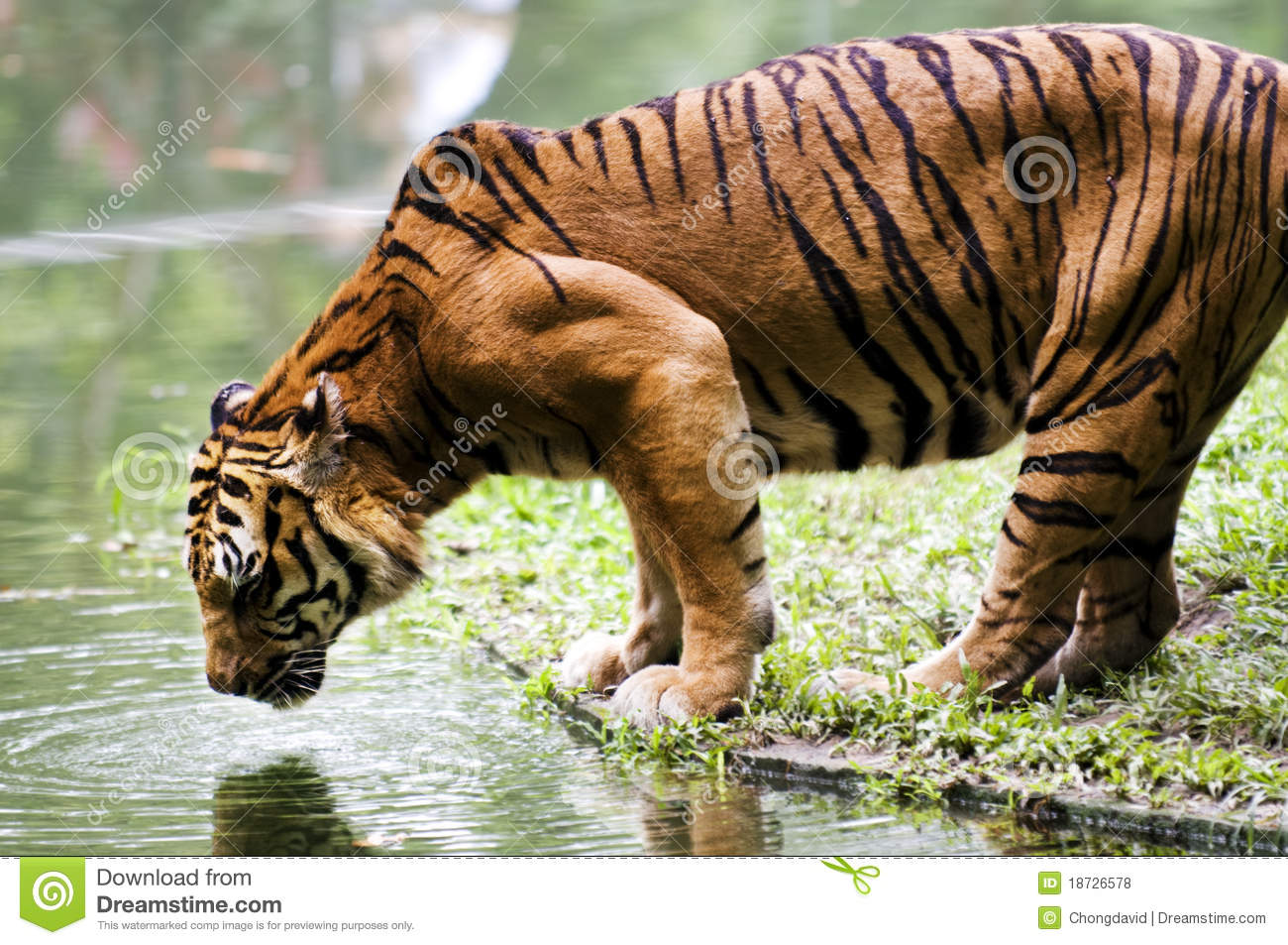 Animals Drinking Water Images